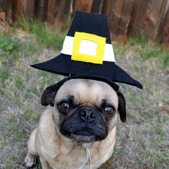 dog with pilgrim hat