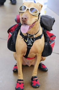 hiking safety with your pet