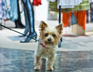 dog friendly restaurants and shopping in phoenix (3)