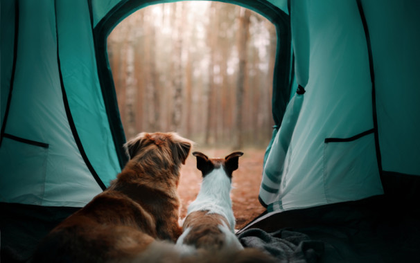 camping with your pet